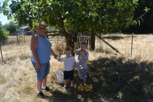 Picking Applese and Prunes - Aunt with little boys - Copyright Adrienne Z. Milligan